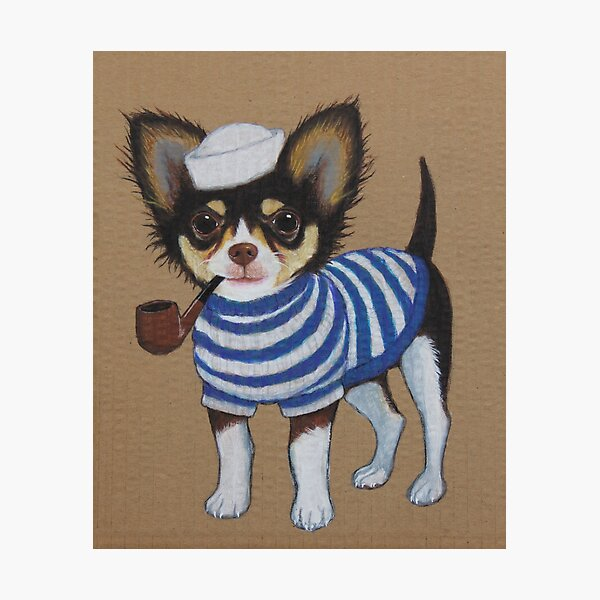 Sailor Chihuahua Photographic Print