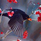 Black Bird in Flight by artstoreroom