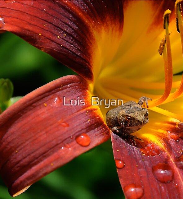 Good Morning! by Lois  Bryan