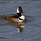Supercharged Merganser by Janika
