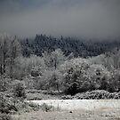 After Snow Storm by Olga Zvereva