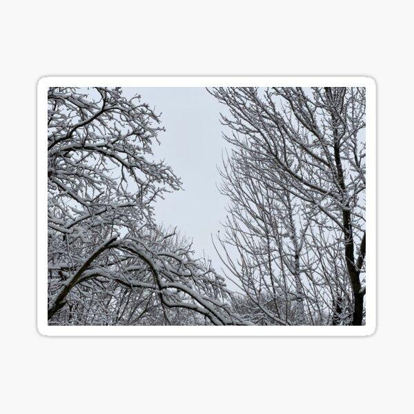 Winter Sky Sticker