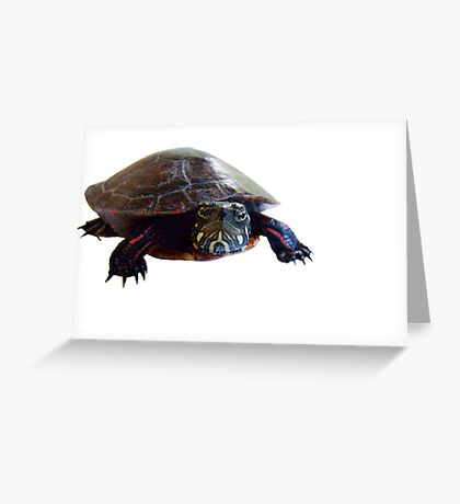 The Turtle Greeting Card