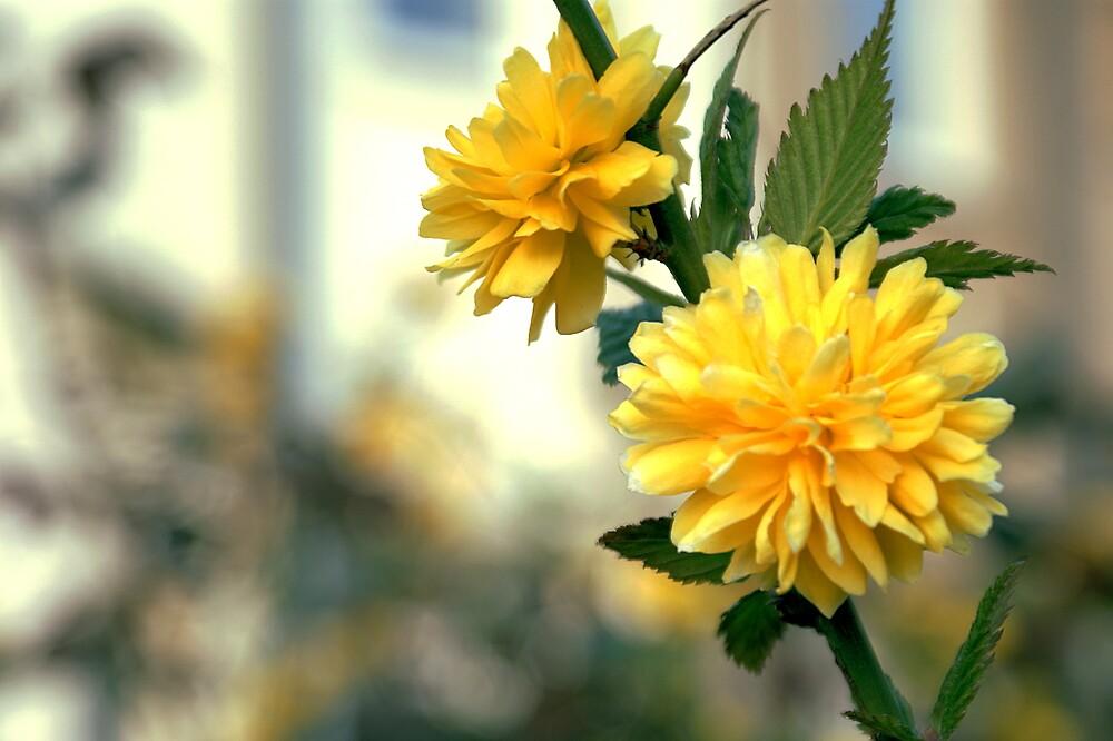 Yellow Flower by Lennox George