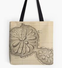 Old Tahiti Map Tote Bags | Redbubble on vintage map of southeast asia, vintage map of costa rica, vintage map of caribbean,