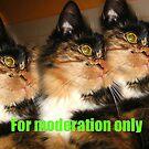 Moderation Banner by LadyWendyAnnie