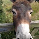 Bay Donkey by Michelle Boyd