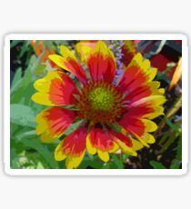 Technicolor Gazania Flower Silk Screen Sticker