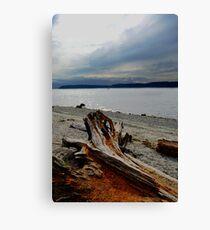 Cloudy Driftwood Canvas Print