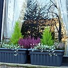 Window Boxes And Reflections by Fara