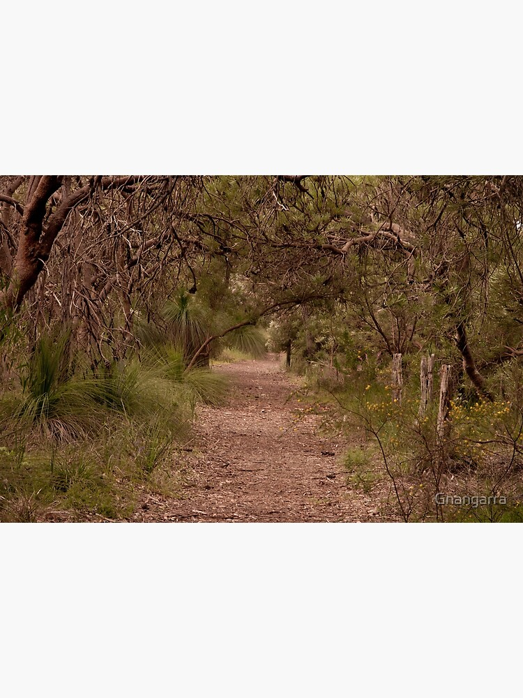 Banksia grove by Gnangarra