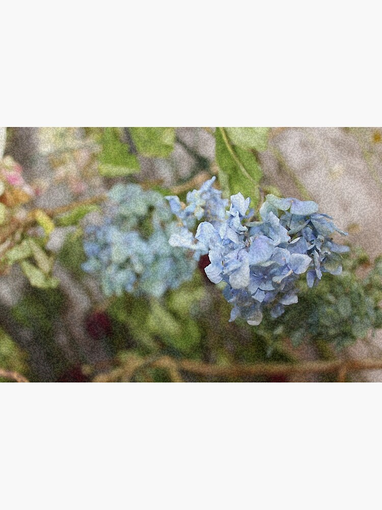 Dried Hydrangea Heads Print In Sponged Effect Greeting Card By