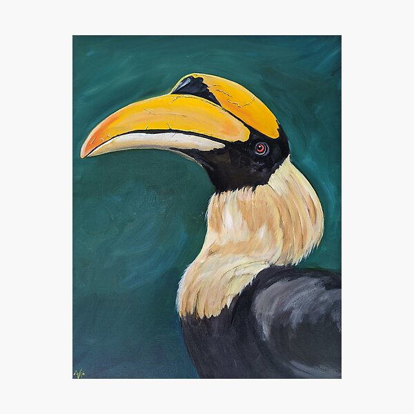 Harry the Horn bill Photographic Print