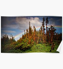 Rainbow Forest Poster
