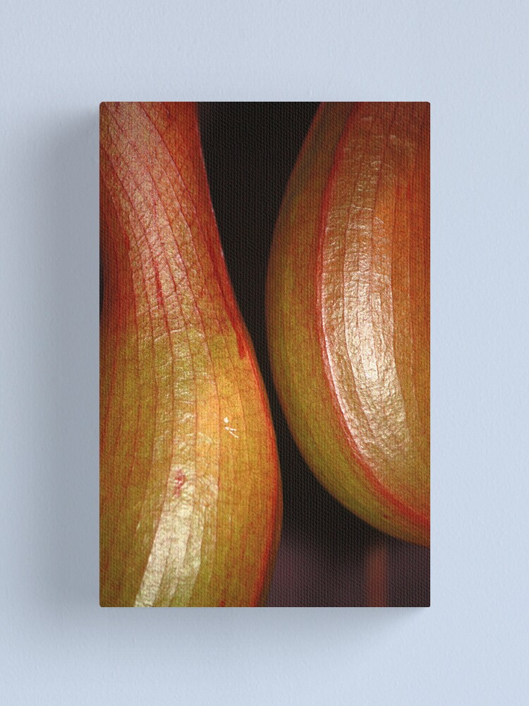 Alternate view of sensual curves and veins Canvas Print