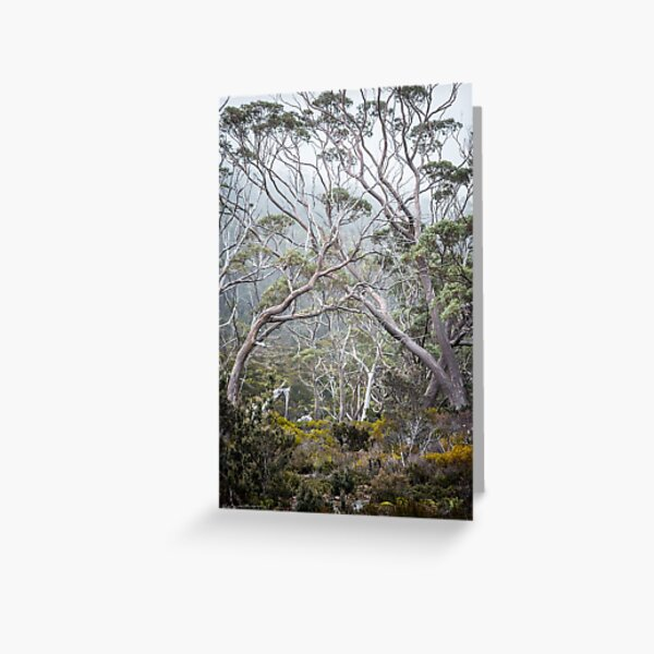 Mountain Gums Greeting Card