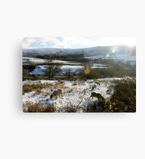 Sheep with Lens Flare Canvas Print