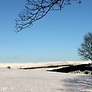 Solitary sheep on t'hill by Mark Smitham