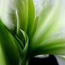 White & Green by SmoothBreeze7