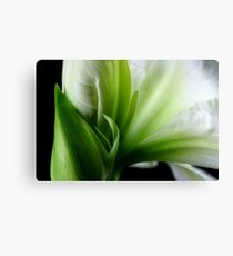 White & Green Canvas Print