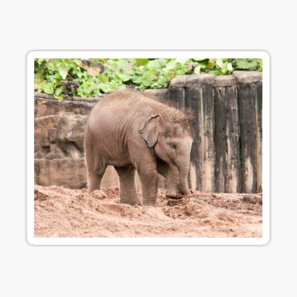 Baby Elephant Photography  Sticker