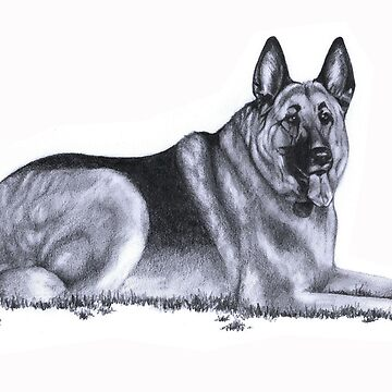 German Shepherd by k-bryant88
