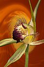 Swamp Orchid with Orange Swirl, native orchid. by Leonie Mac Lean