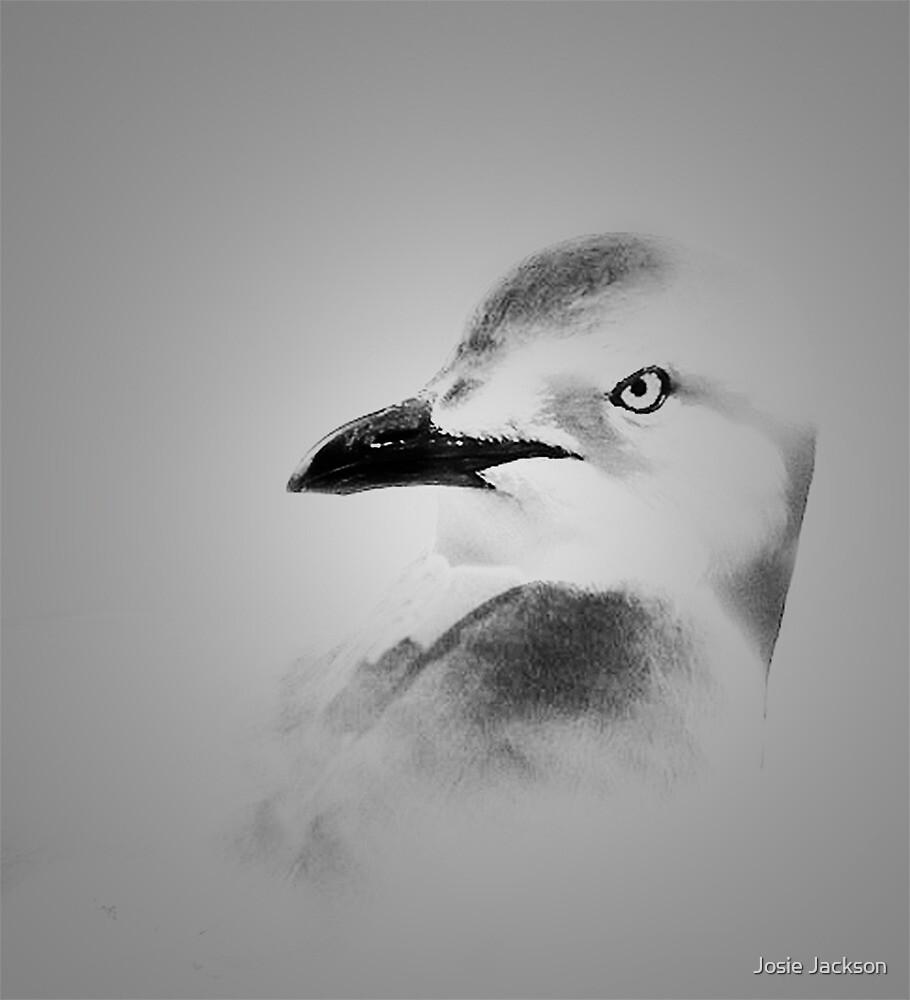 Seagull by Josie Jackson