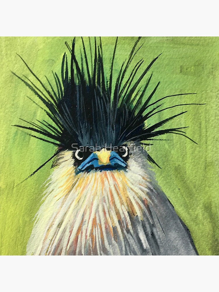 This bird, A Brahminy Starling, showing off hair in the time of a pandemic. by sarahrozdilski