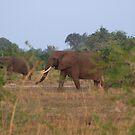 Hiding An Elephants In Grass by Stephen Monro
