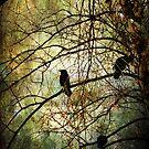 Black birds by John Rivera