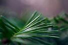 Pine Needle Swirl by William Martin