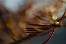 Abstract Spruce Needles Macro Photography by William Martin