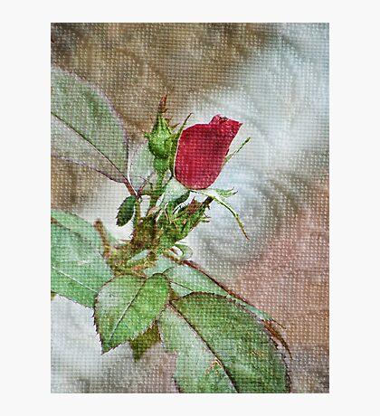 A Single Textured Rose   Fotodruck