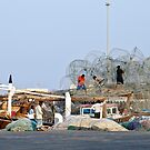 Qatar: A Hive of Activity by Kasia-D