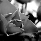 Rose Closeup (B&W) by Mark Smitham