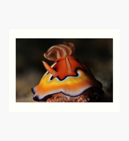 Co's Chromodoris Art Print