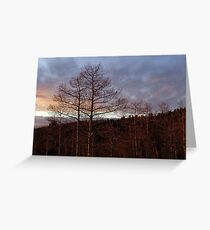Leafless silhouette at sunset Greeting Card