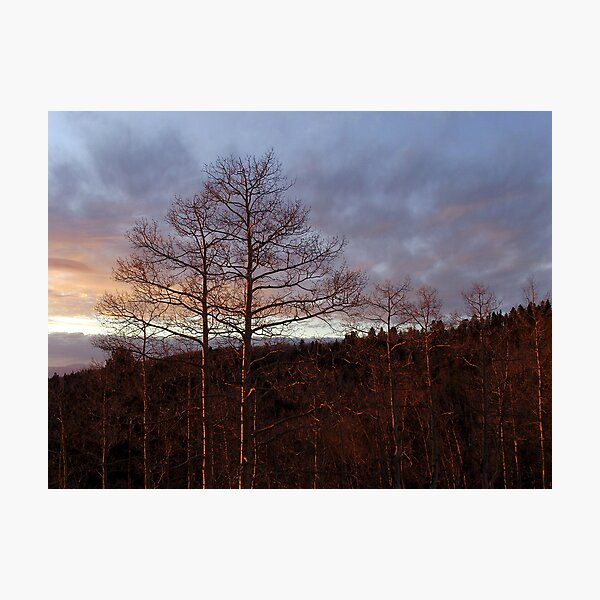 Leafless silhouette at sunset Photographic Print