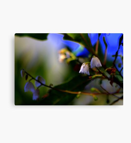 North Head Manly -  Nature's Bells Canvas Print