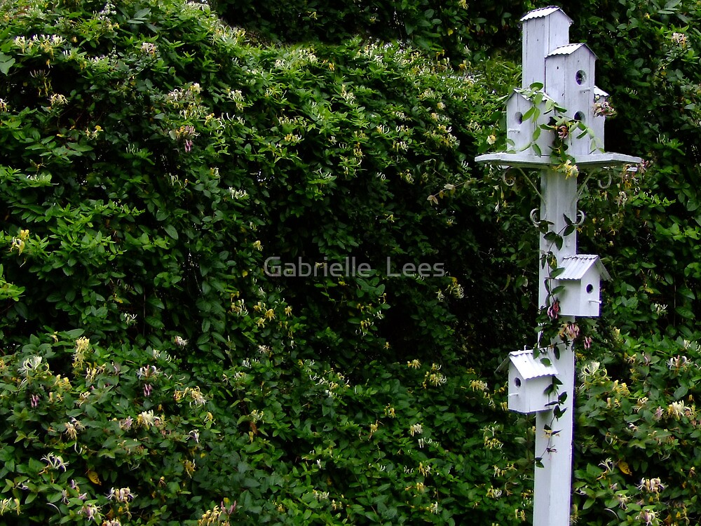 Honeysuckle Hedge and Birdhouse by Gabrielle  Lees
