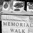 North Head Manly - Memorial Walk by miroslava