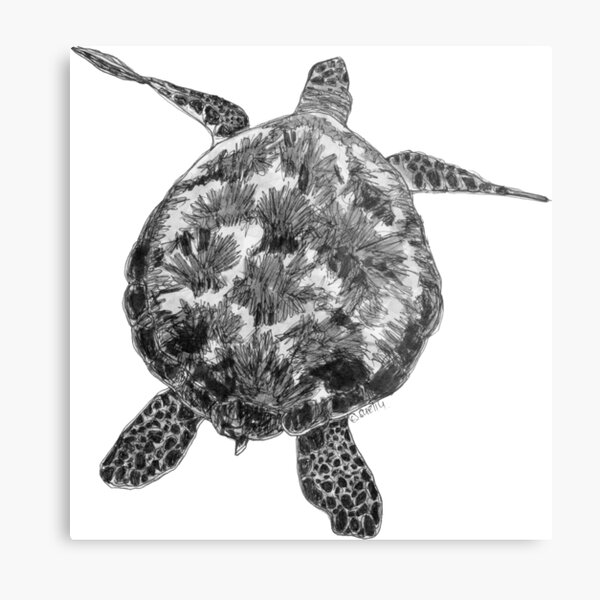 Jacki the Turtle Metal Print