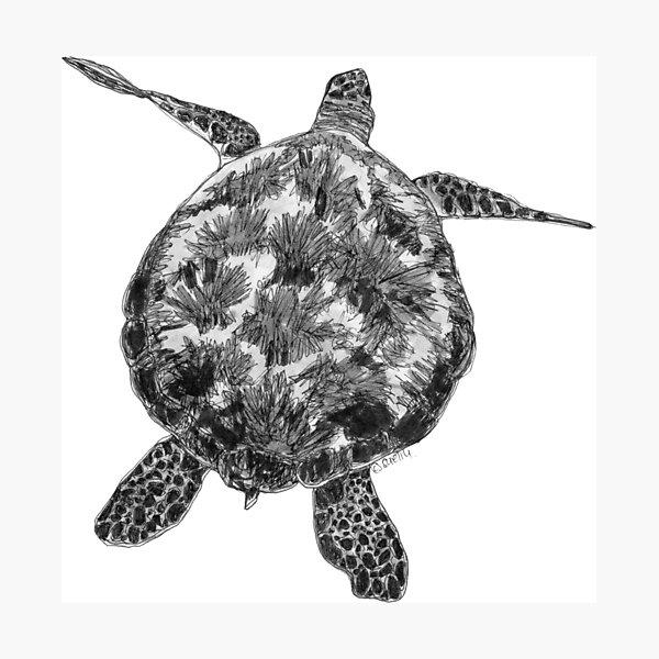 Jacki the Turtle Photographic Print
