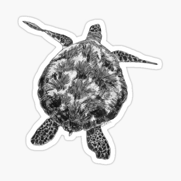 Jacki the Turtle Sticker
