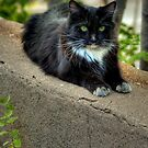 """"""" Kitty On The Curb"""" by K D Graves Photography"""
