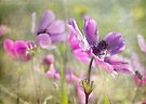 Windflowers by Teresa Pople