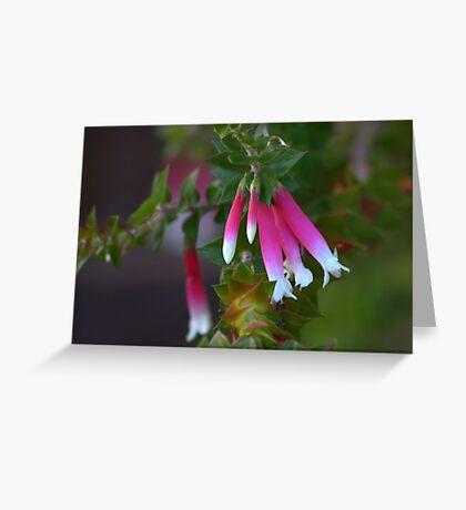 North Head Manly - Fuschia Heath Greeting Card