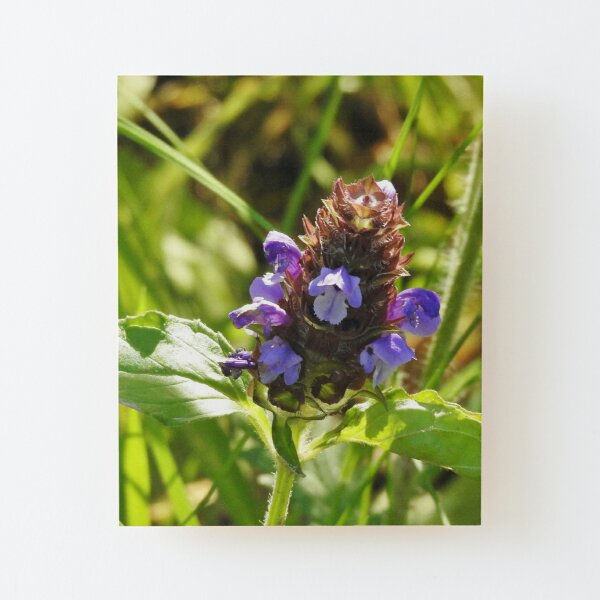 Self Heal Wildflower Wood Mounted Print