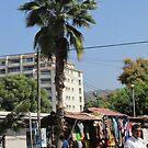 Palm nearby Plaza Cardenas, Puerto Vallarta, Mexico by PtoVallartaMex
